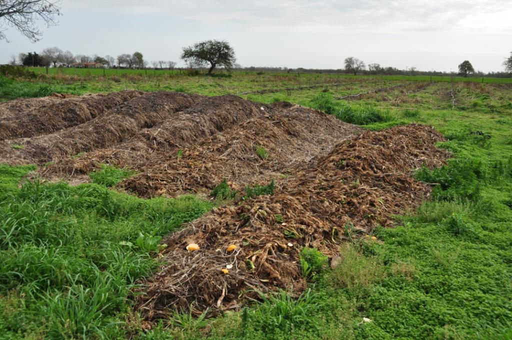 Fertilizantes orgánicos: beneficios productivos y ecológicos