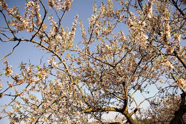 El incremento en la temperatura global y su impacto en la vida vegetal