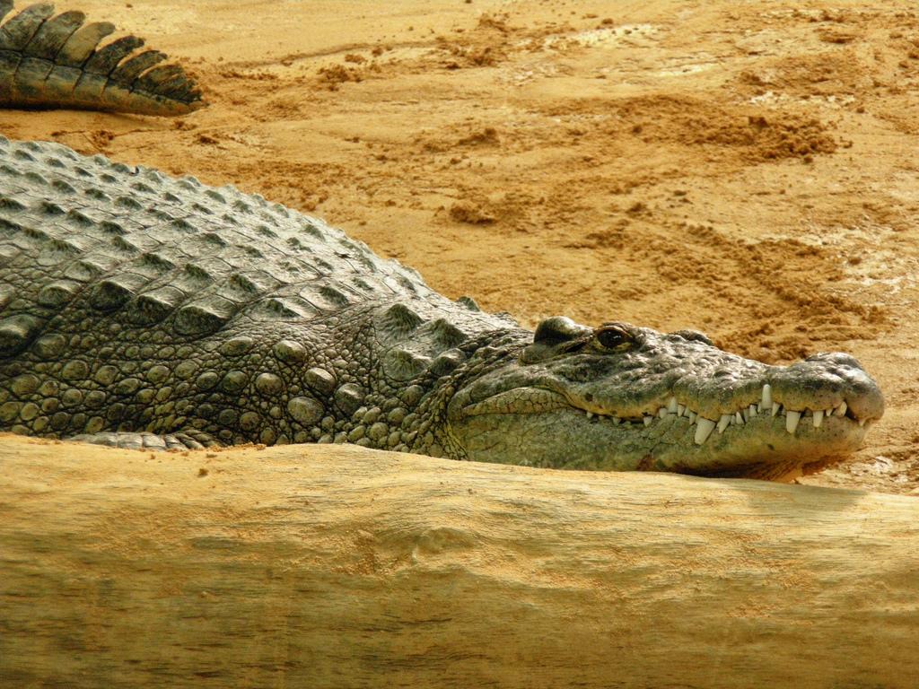 El mutualismo: favores entre especies