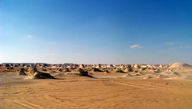 La desertificación, un problema que requiere un abordaje integral