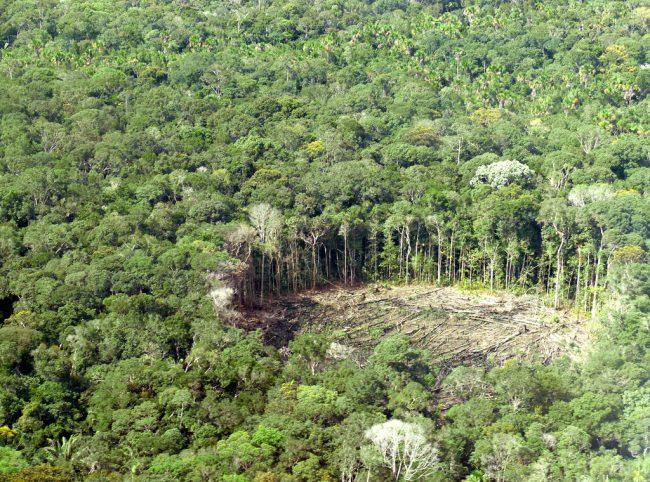 Amazonas: más selva que nunca
