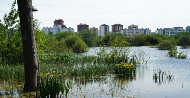 Beneficios del anillo verde en una fusión sostenible de naturaleza y ciudad