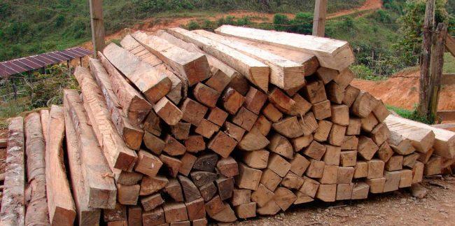 Deforestación: causas y soluciones