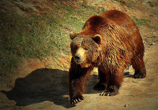 La lista roja de las especies amenazadas