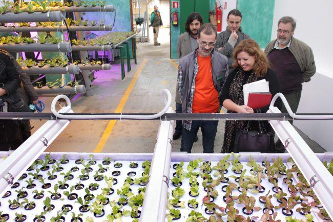El Centro de Formación Municipal de A Coruña recolecta lechugas gracias al cultivo hidropónico
