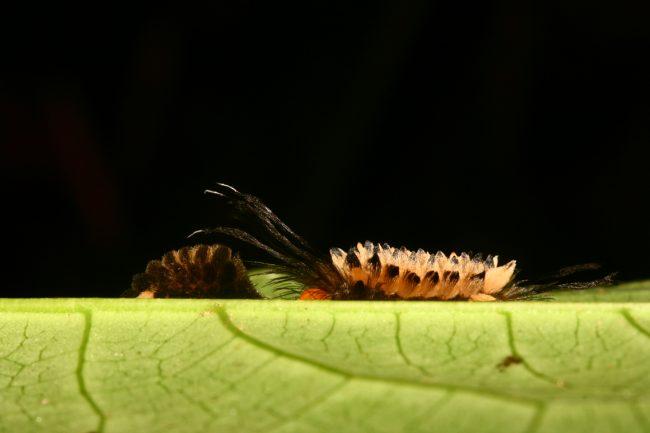El 70% de la diversidad biológica se concentra en un 10% de la superficie del planeta