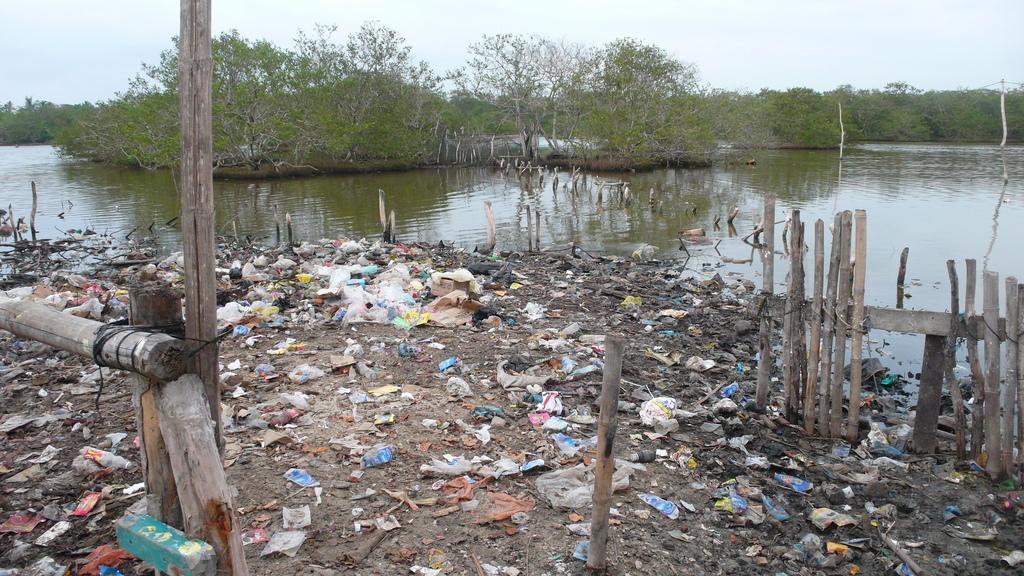 """Plásticos, mercurio y medicamentos, la preocupante """"alimentación"""" de nuestros peces"""