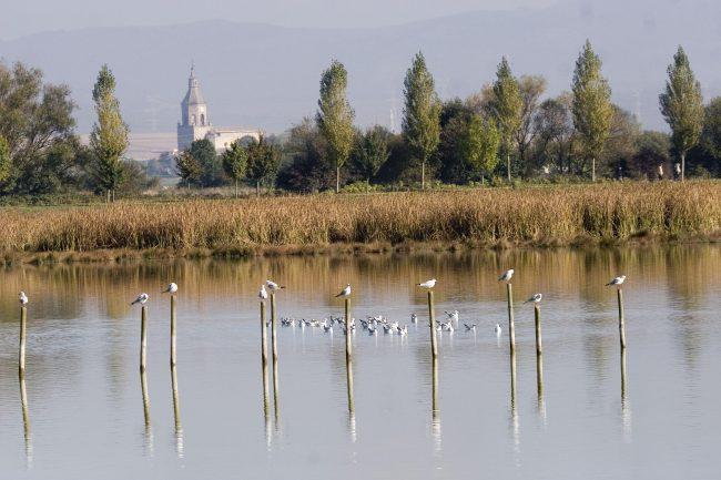 Las IBAs (Áreas Importantes para las Aves) en España