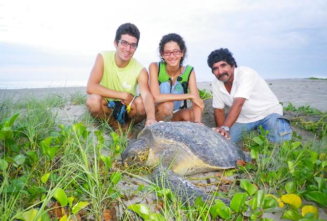 Pasar el verano ayudando a las tortugas