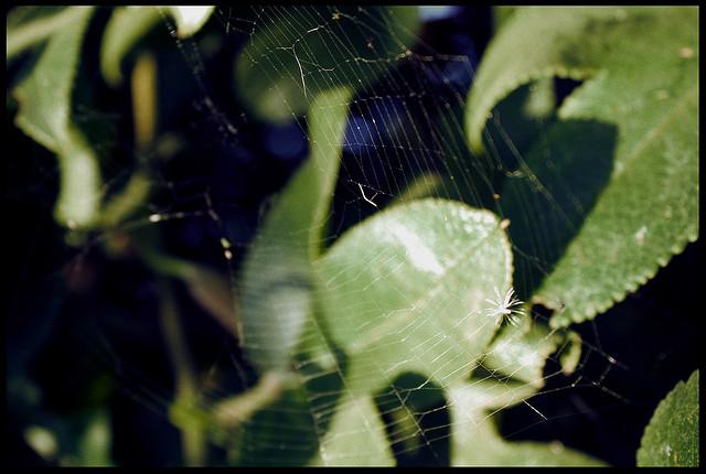 Las arañas reciclan decorando sus telarañas con ramas