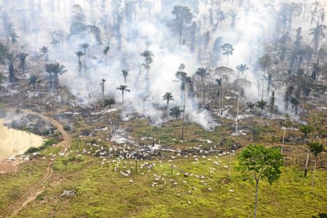 Primero se tala y luego se quema la selva para abrir pastos para la ganadería. (Foto: Daniel Beltrá-Greenpeace)